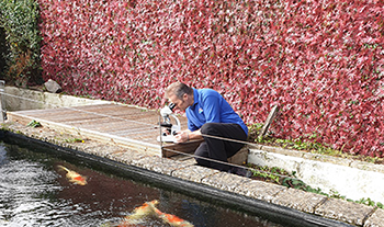 Pond and Koi Specialists in East Sussex Koi and Pond Services