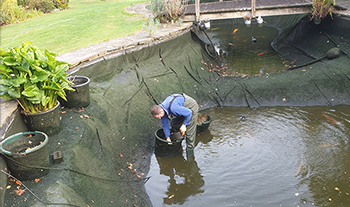 Pond and Koi Specialists in East Sussex pond cleans