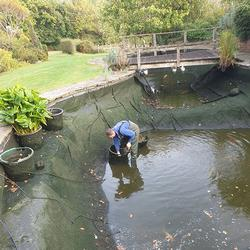 Pond & Koi Specialists in East Sussex pond cleans