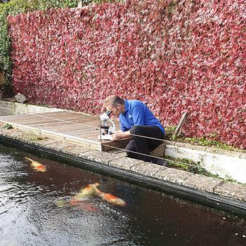 Pond & Koi Specialists in East Sussex koi and pond health checks
